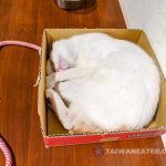 pet-shelter-cafe-taipei-浪浪別哭-19